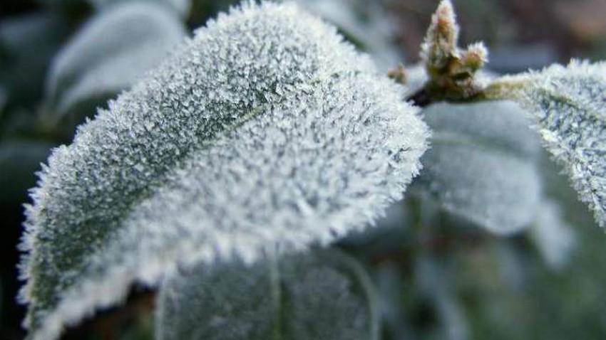 الأردن | اشتداد واضح على البرودة خلال الليالي القادمة خاصة ليلة الخميس/الجمعة