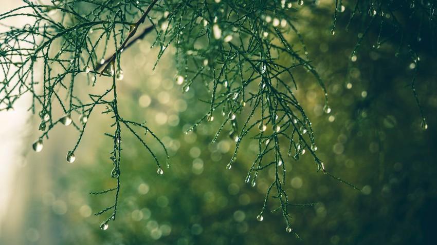 رائحة المطر او الرائحة المميزة التي تظهر بعد المطر .. ماهي؟ وما سببها؟
