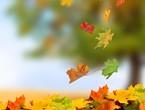 Pourquoi les arbres tombent-ils des feuilles à l'automne ?!