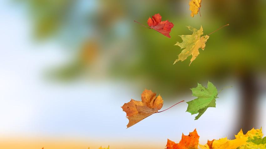 لماذا تتساقط أوراق الأشجار في الخريف؟!
