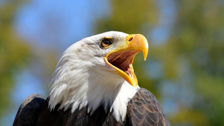 لماذا لا تملك الطيور أسنانًا؟ وهل كانت سابقاً بدون أسنان؟