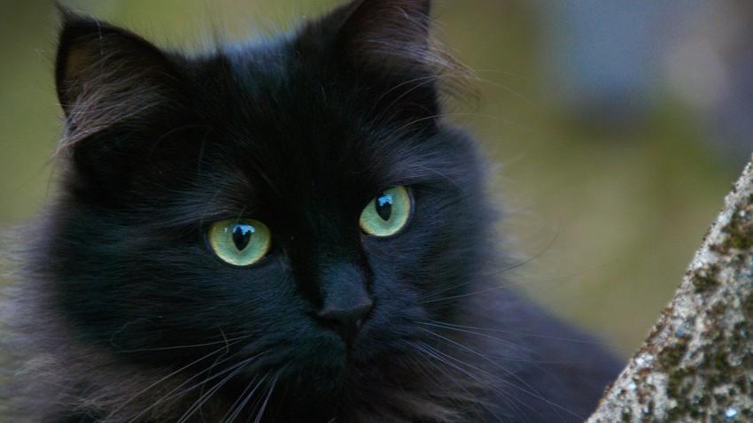 خرافات ارتبطت بالقطط السوداء.. ما حقيقتها؟!