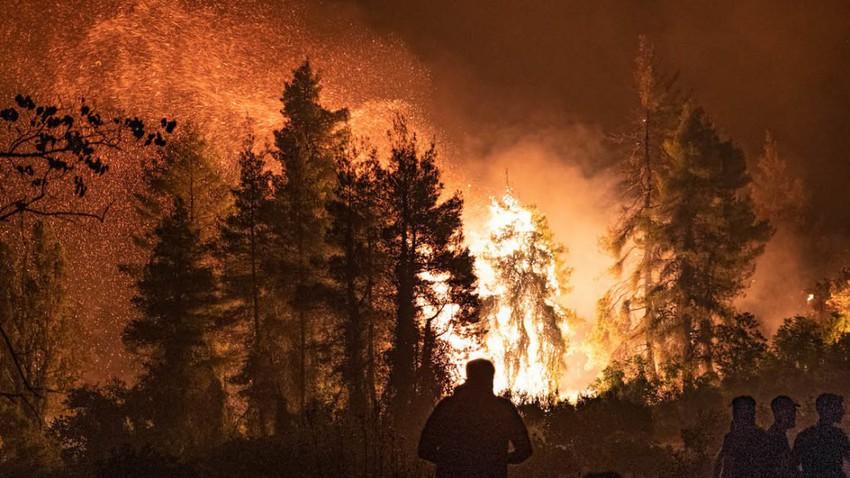 حرائق اليونان تلتهم كل ما في طريقها وتحرق شجرة زيتون تاريخية عمرها 2500 عام