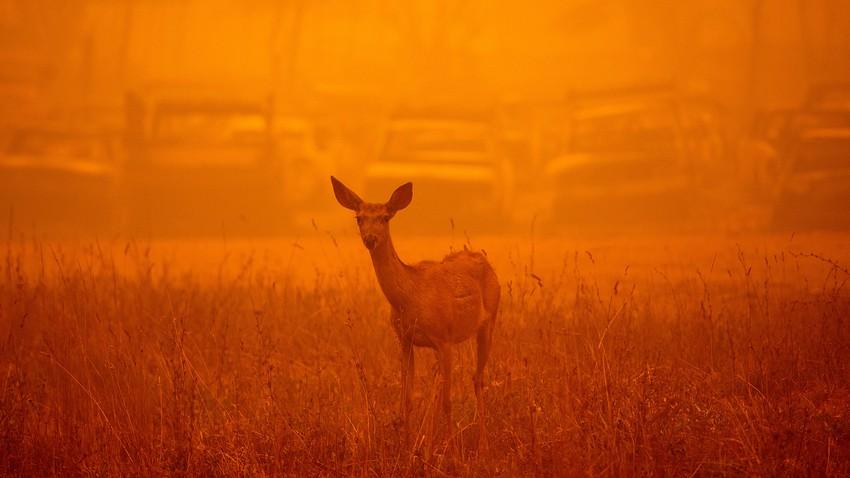 ما مدى ارتباط الأحداث المتطرفة التي يشهدها العالم الآن بتغير المناخ.. وكيف ساهم الإنسان في حدوثها
