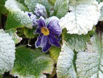 7 ways to protect your plants from sudden frosts