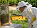 عيش تجربة ممتعة في تربية النحل وإنتاج العسل مع مربو النحل في الأردن