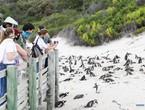 قاتل صغير غير متوقع يتسبب بموت 63 من طيور البطريق المهددة بالانقراض