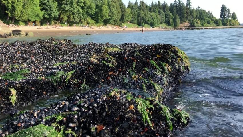 نفوق أكثر من مليار حيوان بحري في كندا بسبب ارتفاع درجات الحرارة