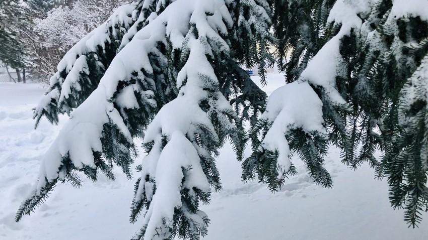 ما هي العوامل التي تؤثر على فرصة تساقط الثلوج على المملكة