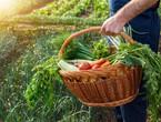 أهم الخضراوات التي يمكن زراعتها في الحديقة خلال فصل الخريف