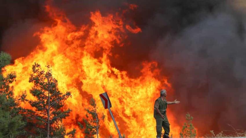 هل يمكن لحرائق الغابات أن تشتعل من تلقاء نفسها أم لابد من فاعل؟!