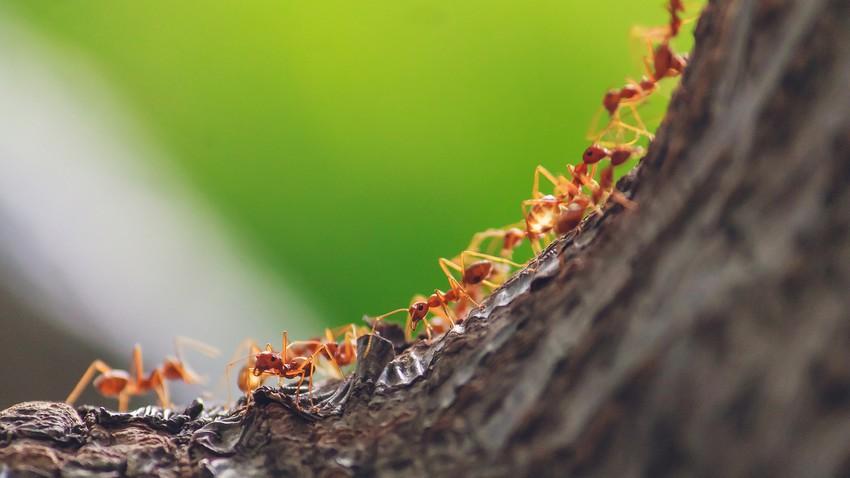 طرق آمنة وفعّالة للتخلص من النمل الموجود في المنزل