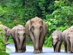 هذه هي حديقة خاو ياي الوطنية.. الأشهر في تايلاند