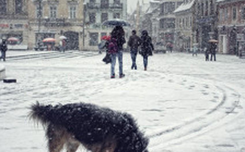 الثلوج جاءت مُبكراً في رومانيا هذا العام
