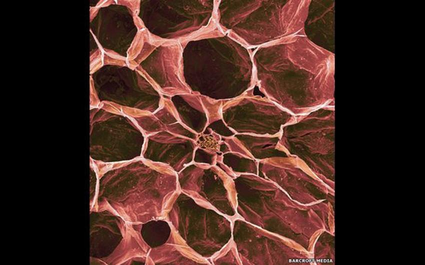 صورة مجهرية لما بداخل الطماطم