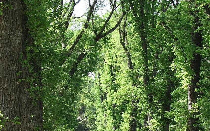 ممر في أحد الحدائق في  ملبورن