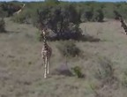 طائرة بدون طيار تحلق فوق أكبر محمية طبيعية في كينيا وتلتقط أجمل المشاهد