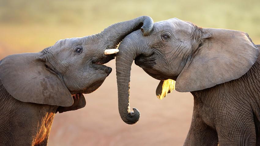 أفضل الأماكن لمشاهدة الفيلة في إفريقيا