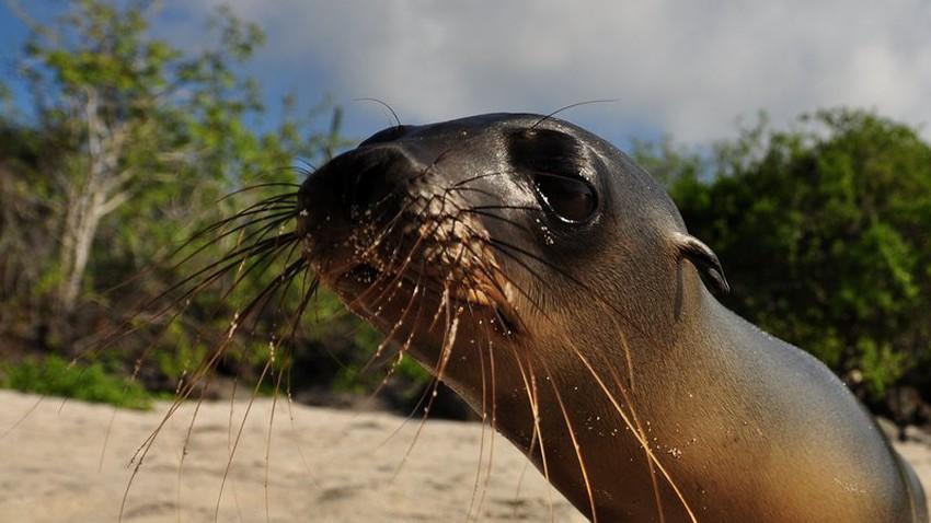 كم ستكلفك رحلة إلى جزر غالاباغوس؟