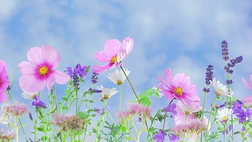 الاعتدال الربيعي... ما هو وبما يتميز؟