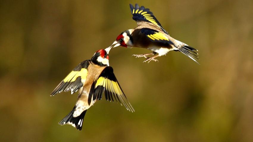 الطيور البرية أولى ضحايا تغير المناخ في المشرق العربي