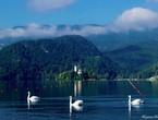 بالصور : البحيرة الساحرة في سلوفينيا .. جنة على الارض