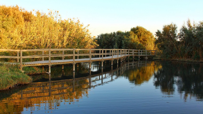 Azraq Water Reserve.. a charming water nature in the heart of the desert and a corridor for migratory birds