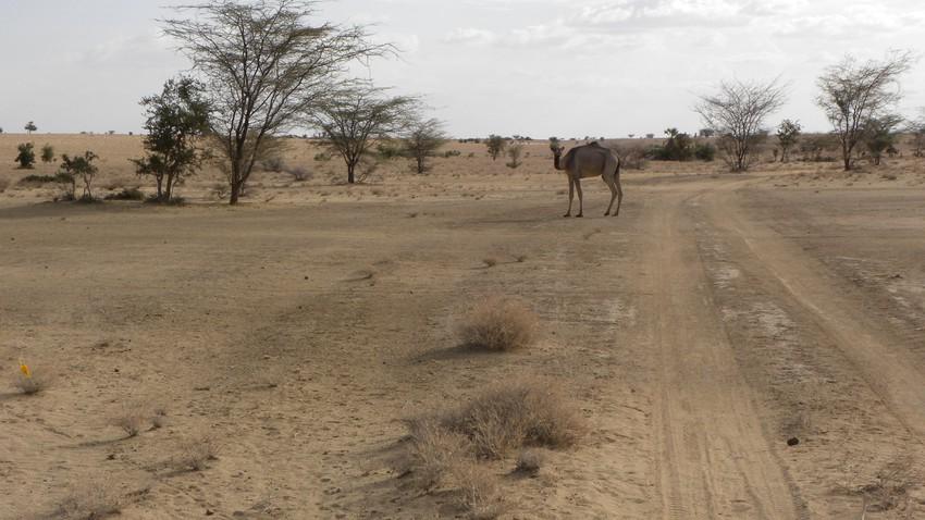 الكويت | ارتفاع على درجات الحرارة الإثنين وفرصة لزخات رعدية من المطر على بعض المناطق