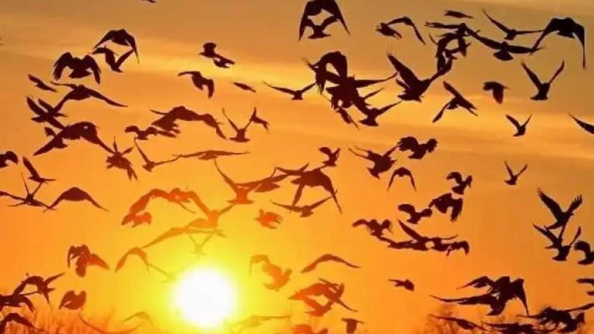 المفرق: طيور مهاجرة تقطع الكهرباء والماء عن مناطق في المحافظة