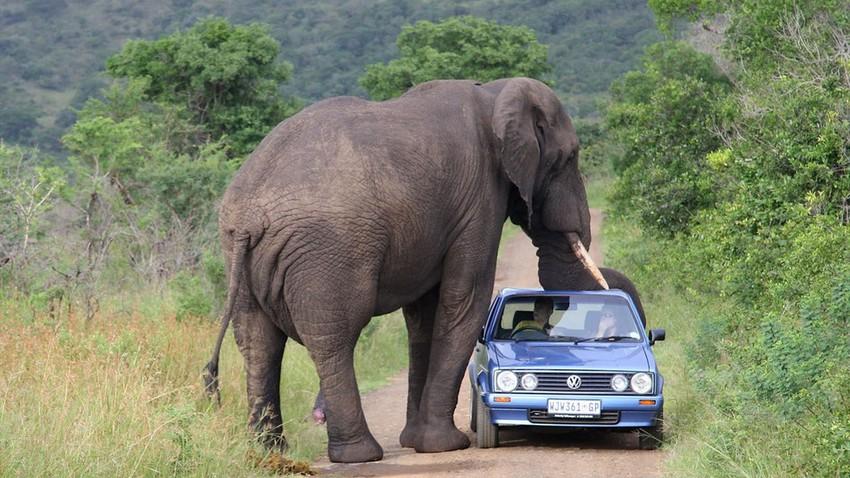 حديقة كروجر الوطنية.. حياتك بين البرية في جنوب إفريقيا