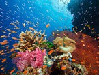 نيوزيلندا تقرر إنشاء واحدة من أكبر محميات المحيطات في العالم
