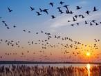 هجرة الطيور... ما أنواعها ولماذا وأين تهاجر؟