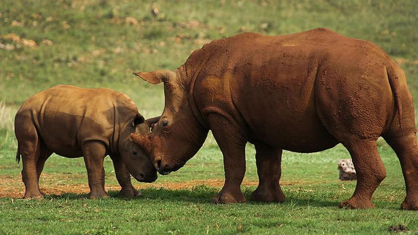 ماذا تعرف عن حديقة ليمبوبو الكبرى العابرة للحدود؟