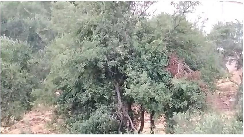 بالفيديو: شاهد مقاطع مختلفة من عجلون ترصد الأمطار الصيفية النادرة