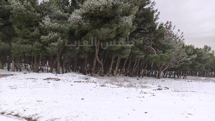 مشاهد وصور مميزة لثلوج الطفيلة صباح اليوم الجمعة 29/1/2021