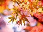 حالة الطقس ودرجات الحرارة المتوقعة في الأردن بأول أيام فصل الخريف فلكياً