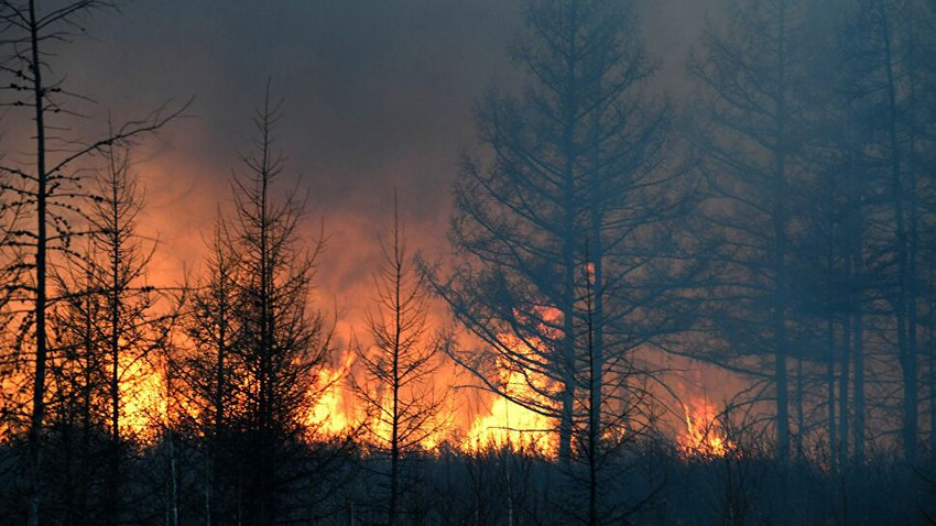 Un immense incendie se déclare dans des arbres fruitiers à Irbid