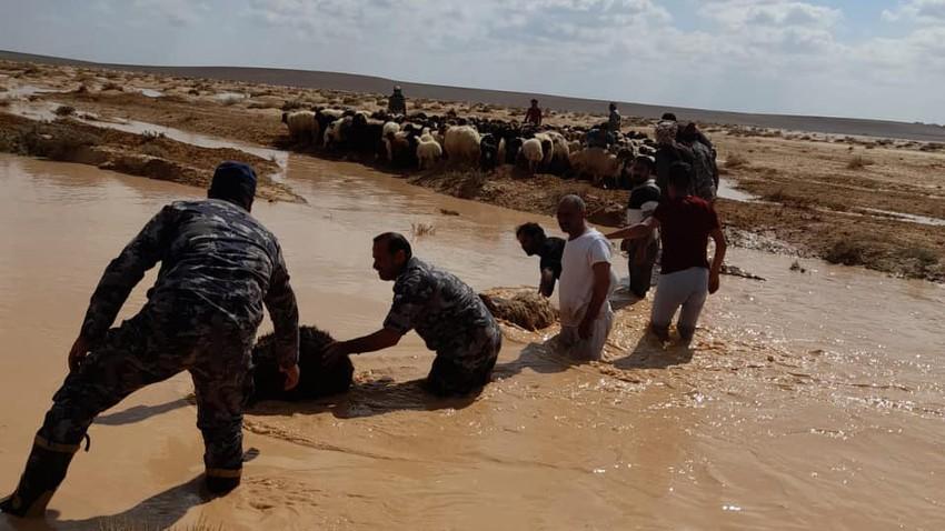 انقاذ (45) رأس من الأغنام على الطريق الصحراوي بسبب سقوطهمفي بركة تجمع مياه الأمطار