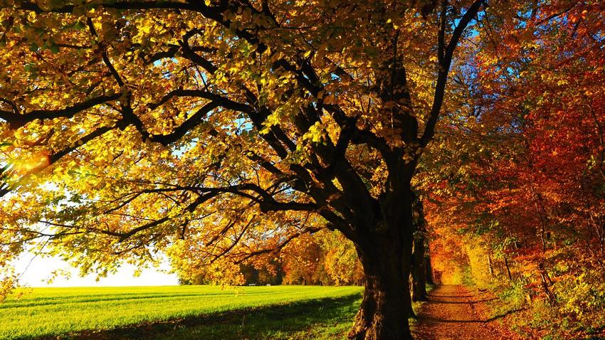 إليك 6 نصائح لتعزيز مناعتك خلال فصل الخريف