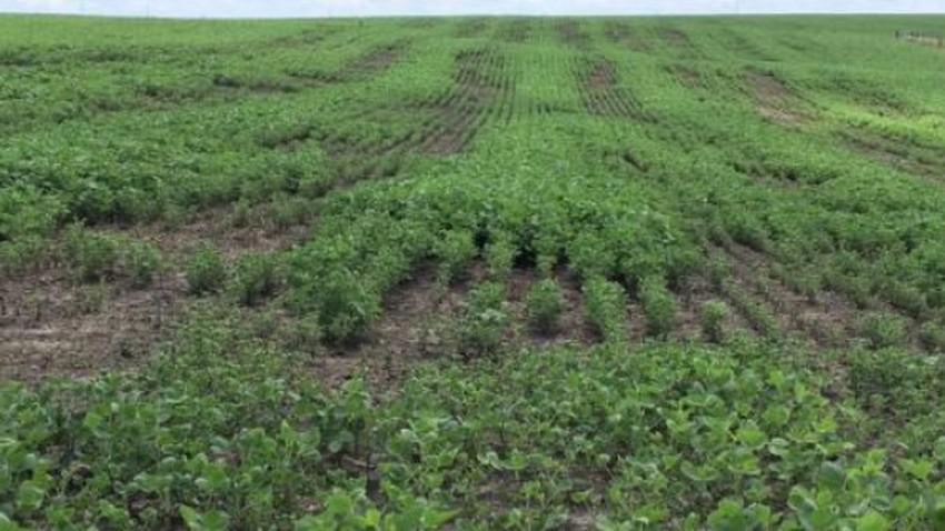 زراعة وادي الاردن : لا أضرار على مزروعات الأغوار جراء الحالة الجوية