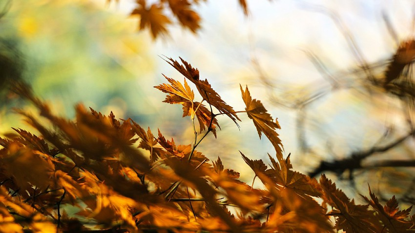 Autumn..health and psychological benefits