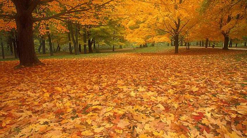 كيف تتغلب على التعب في فصل الخريف؟