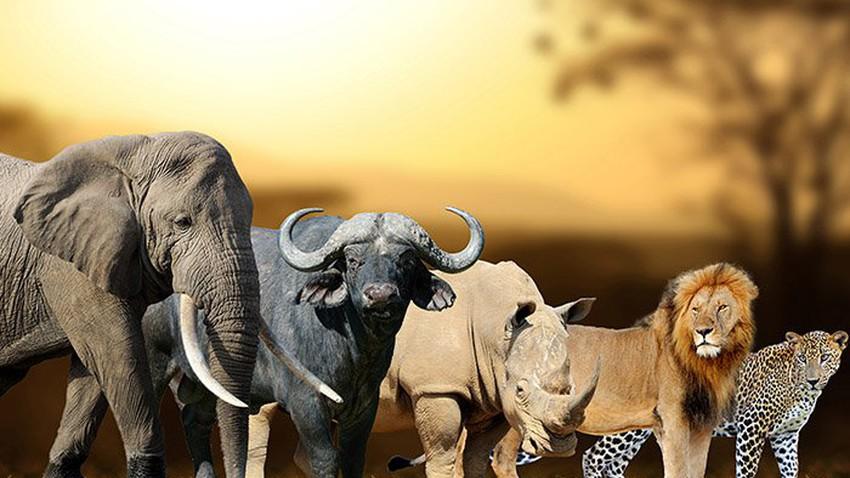 أفضل الأماكن لمشاهدة الخمسة الكبار في إفريقيا