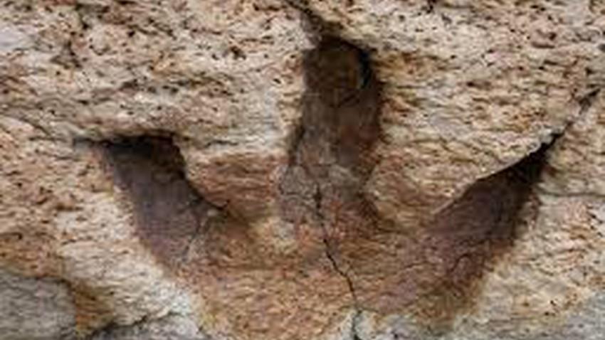 اكتشاف أكثر من 100 أثر لأقدام ديناصورات في تونس