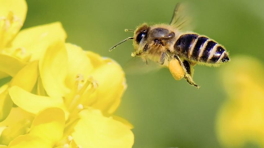 هل تعرف أين يختفي النحل في الشتاء؟