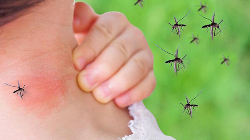 La sensibilité aux insectes ... ses causes et ses méthodes de traitement