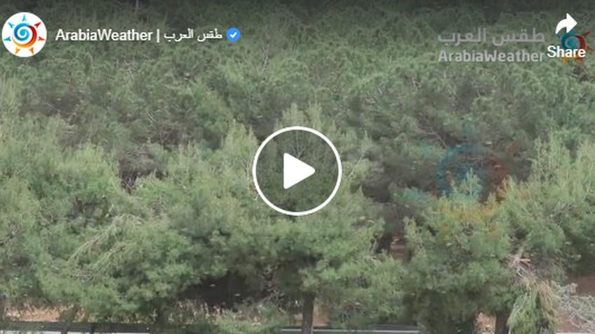 Des essaims de criquets arrivent dans la capitale, Amman, et l'effet des vents sur leur déplacement