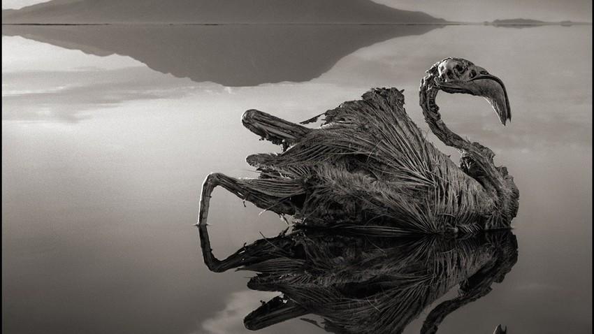 بحيرة تحول الطيور إلى مجسمات حجرية