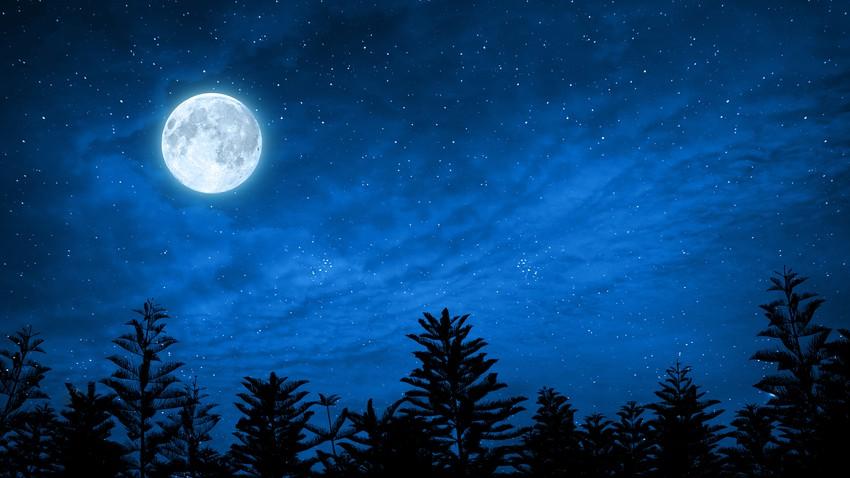 خوفا من نهاية الحياة على الأرض ..علماء يخططون لارسال عينات جينات لأكثر من 6 مليون كائن حي إلى القمر
