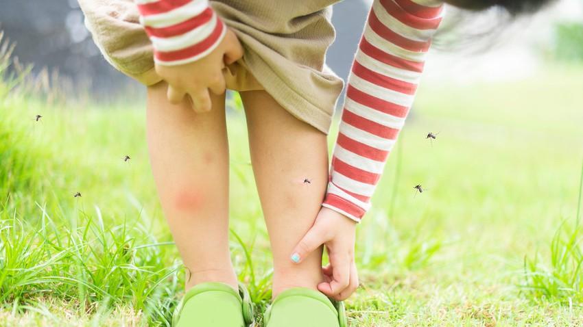 لماذا ينجذب البعوض لبعض الأشخاص أكثر من غيرهم
